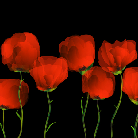 uncultivated: Poppies dance on black blackground