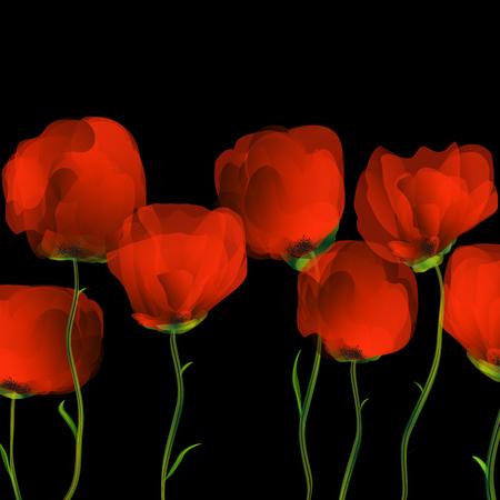 Poppies dance on black blackground
