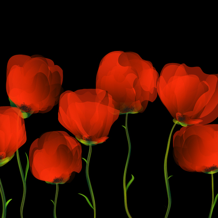 upgrowth: Red poppies row over black background Illustration