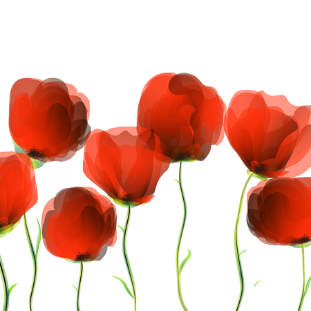 Dancing poppies over white background Illustration