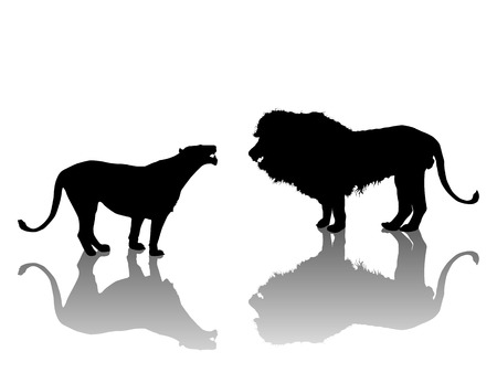 lion tail: Lion and lionesse silhouettes Illustration