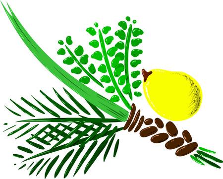 Ilustración vectorial de las cuatro especies de Sucot fiesta judía