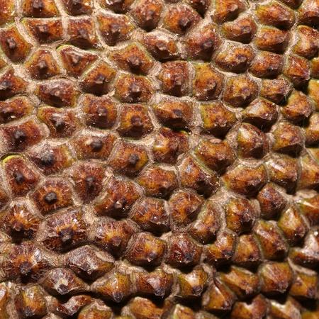Jackfruit skin texture photo