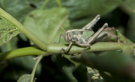 A young grasshopper Stock Photo - 14004350