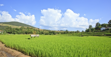 Rice field view of Thailand photo