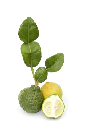 Kaffir lime isolated on the white background photo