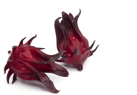 Roselle isolated on the white background photo