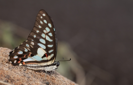 Common jay butterfly in the nature Stock Photo - 20227653