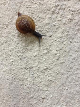 slowly: Snail slowly move Stock Photo