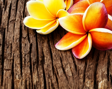 Frangipani flower on the old wood background photo