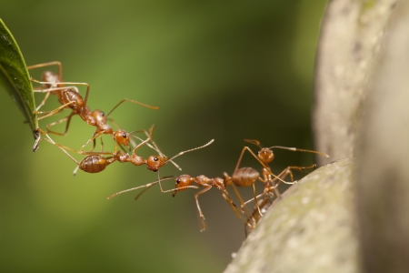 Ant bridge unity  photo