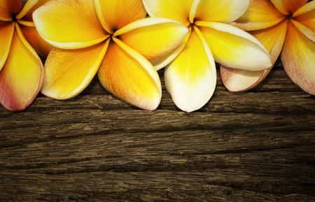 Frangipani flower on the wooden background photo