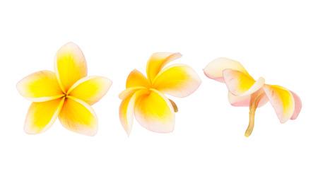 Frangipani flower isolated on the white background photo