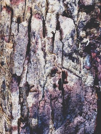 grunge: Wooden grunge texture background