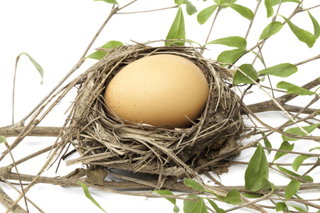 chicken egg: Fresh chicken egg from the nest Stock Photo