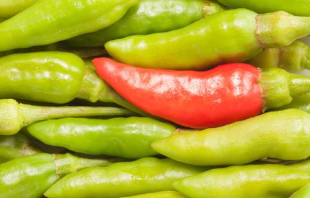 padi: One red bird chili in the green chili Stock Photo