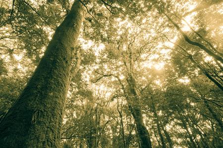 Rainforest travel at Kew-Mae-Pan, Thailand photo