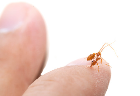 citric acid: The angry ant attack to enemy by bite and spray citric acid
