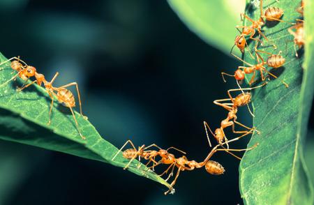 hormiga: Unidad puente Ant Foto de archivo