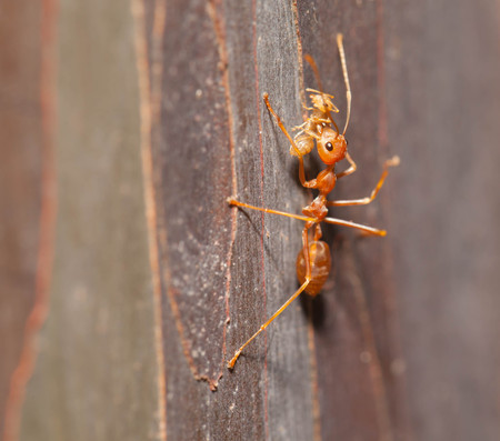 pupa: Ant moving pupa close up