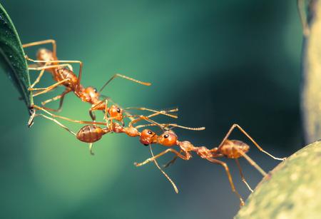 Ant 橋統一 写真素材