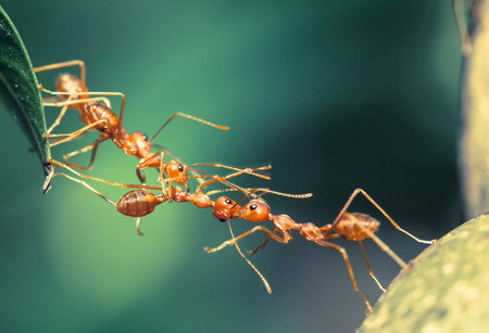 ant: Unidad puente Ant Foto de archivo