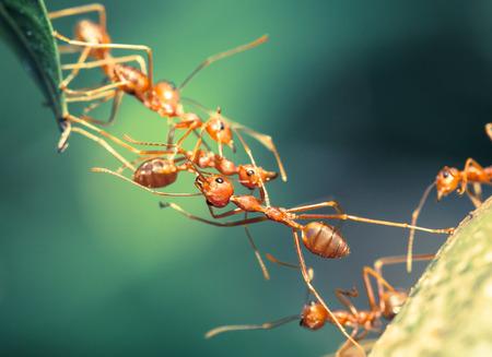 개미 다리 단결