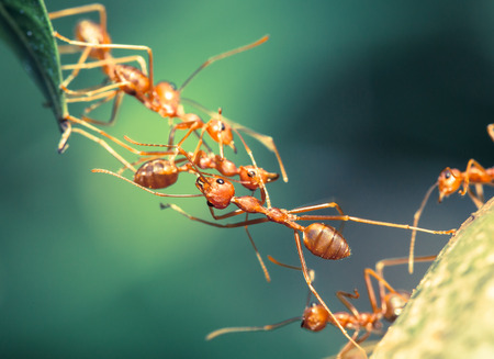 red ant: Ant bridge unity