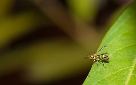 paper wasp: Paper wasp in the nature Stock Photo