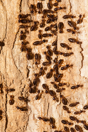 termite: Termite work as team in the nature