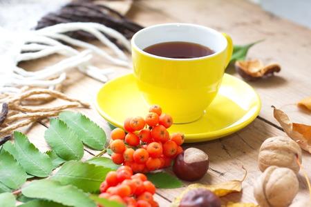 Autumn still life with hot tea, walnuts, leaves and rowan Standard-Bild