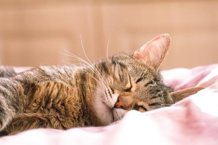 Cat dormire nel letto Archivio Fotografico - 46904249