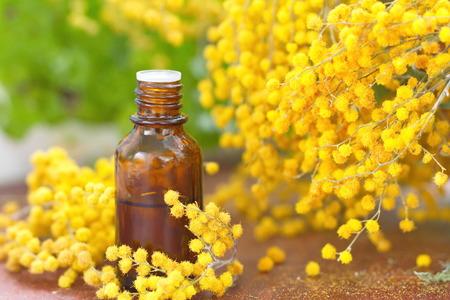 Mimosa ätherischen Aromaöl und frische Blumen Standard-Bild - 53759903