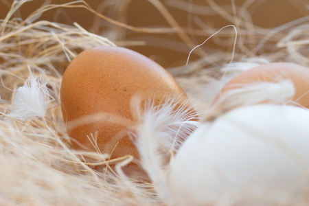 good cholesterol: Raw chicken eggs in the nest Stock Photo