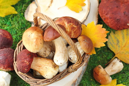 Autumn mushrooms in the basket