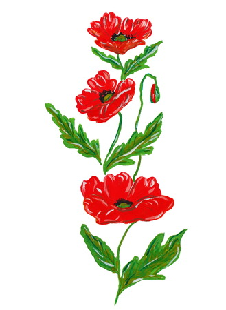Red watercolor poppy flower on white background