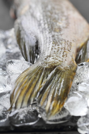 Raw fresh fish keeped on ice cubes and prepared for cooking