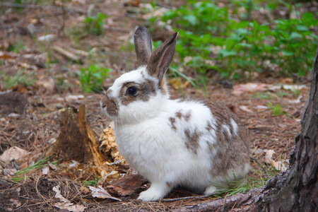 A hare sitting on the ground in the forest