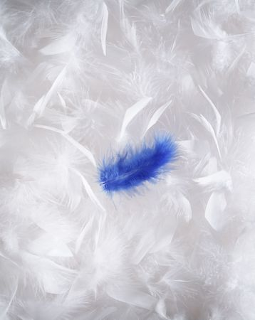 atop: Single Blue Feather atop White Feathers