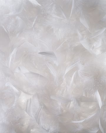 plume: White feather background