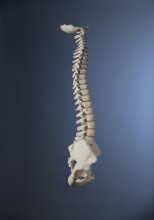 lumbar spine: Human spine with blue background