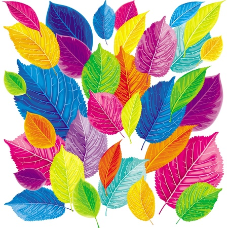 Brightly colored summer and autumn leaves background