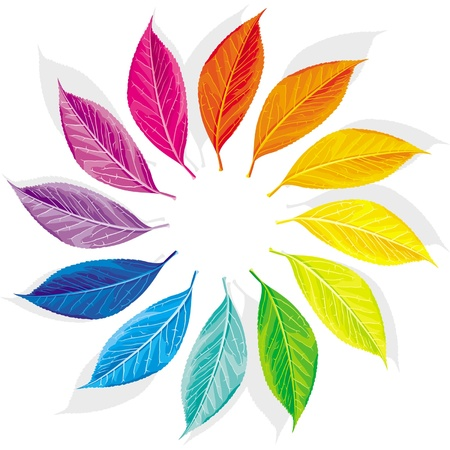 Color wheel as a dozen multi-colored leaves Illustration