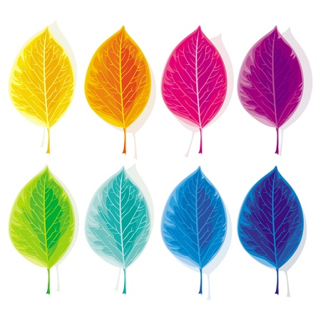 Eight leaves, painted in the colors of the spectrum