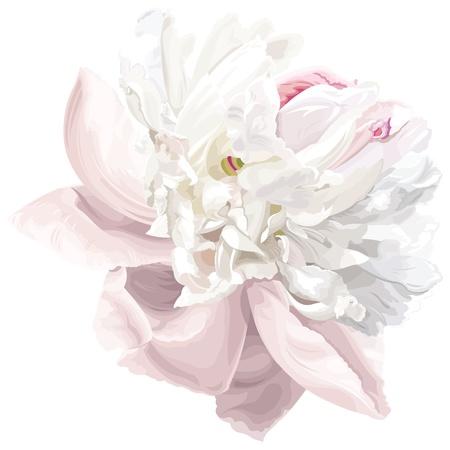 Lujoso peonía blanca flor pintada en tonos pastel Ilustración de vector