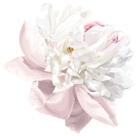 Luxurious white peony flower painted in pastel colors