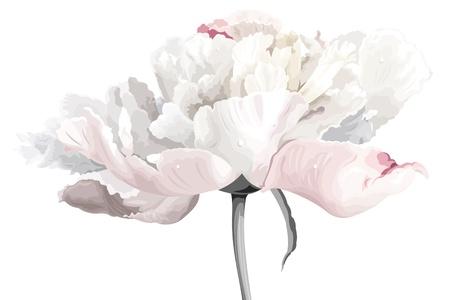 Luxe witte pioen bloem geschilderd in pastelkleuren