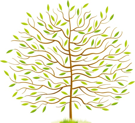 Spring tree with green leaves and grass