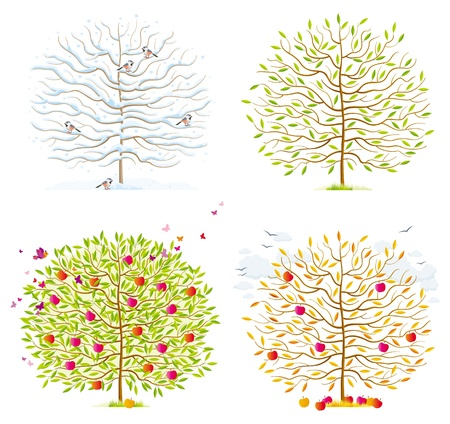 Winter, spring, summer, autumn trees with leaves, birds and clouds Stock Vector - 15706713