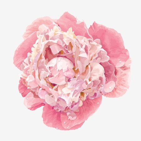 Luxurious pink peony flower painted in pastel colors Ilustração